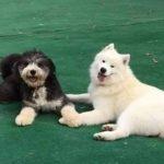 Murphy & Leo