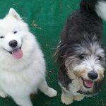 Murphy and Leo